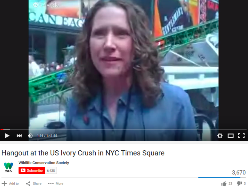 Erin Prada, Manager of Digital Learning and Engagement, hosting a Google Hangout during the U.S. Ivory Crush at Times Square in NYC, organized in partnership with WCS, U.S. Fish and Wildlife Service, NY Department of Environmental Conservation, African Wildlife Foundation, Humane Society, IFAW, NRDC, and WWF, in which 1 ton of confiscated ivory was crushed to make a statement to the ivory trade. (Ivory Crusher in background)
